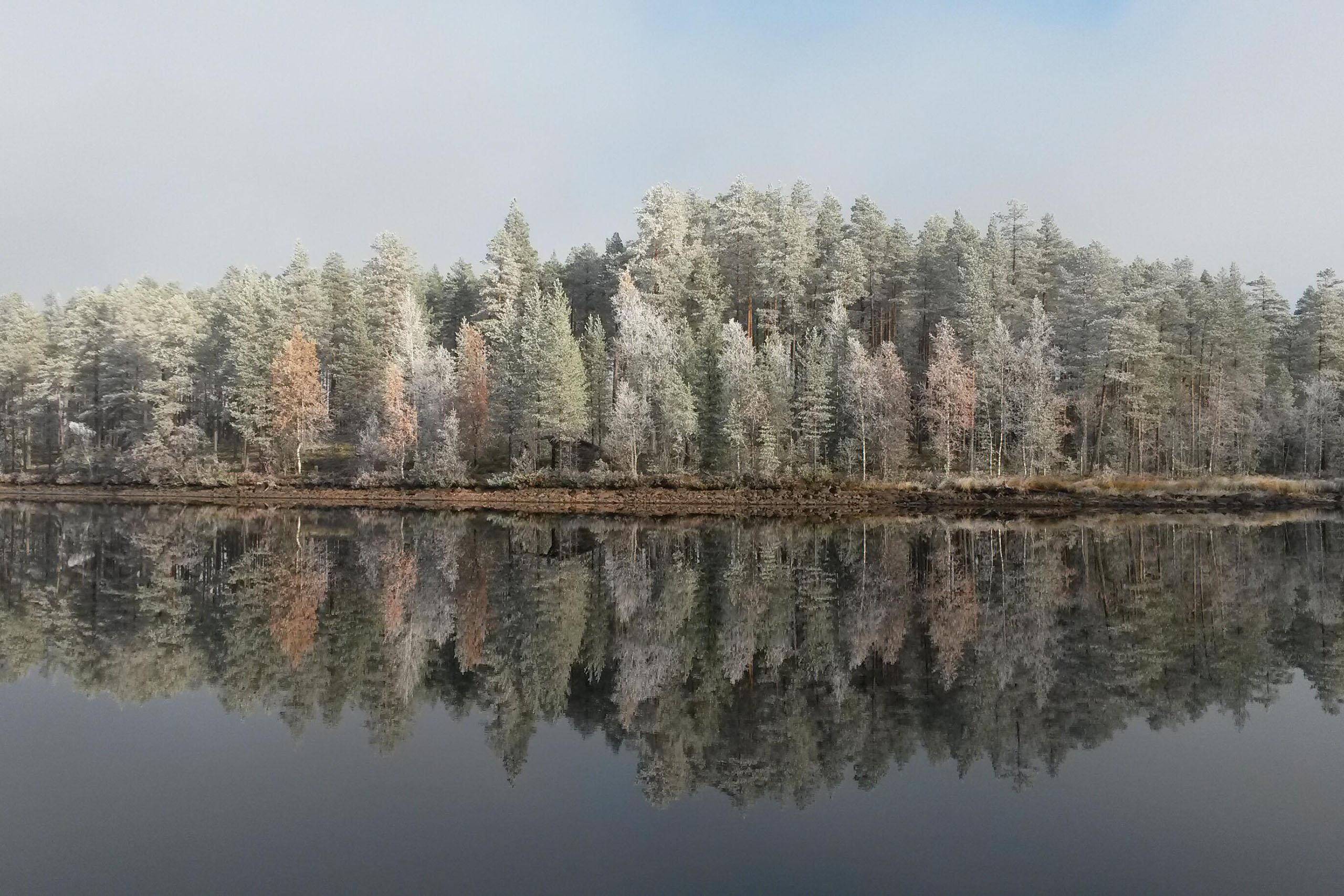 Frostig_skog_2560