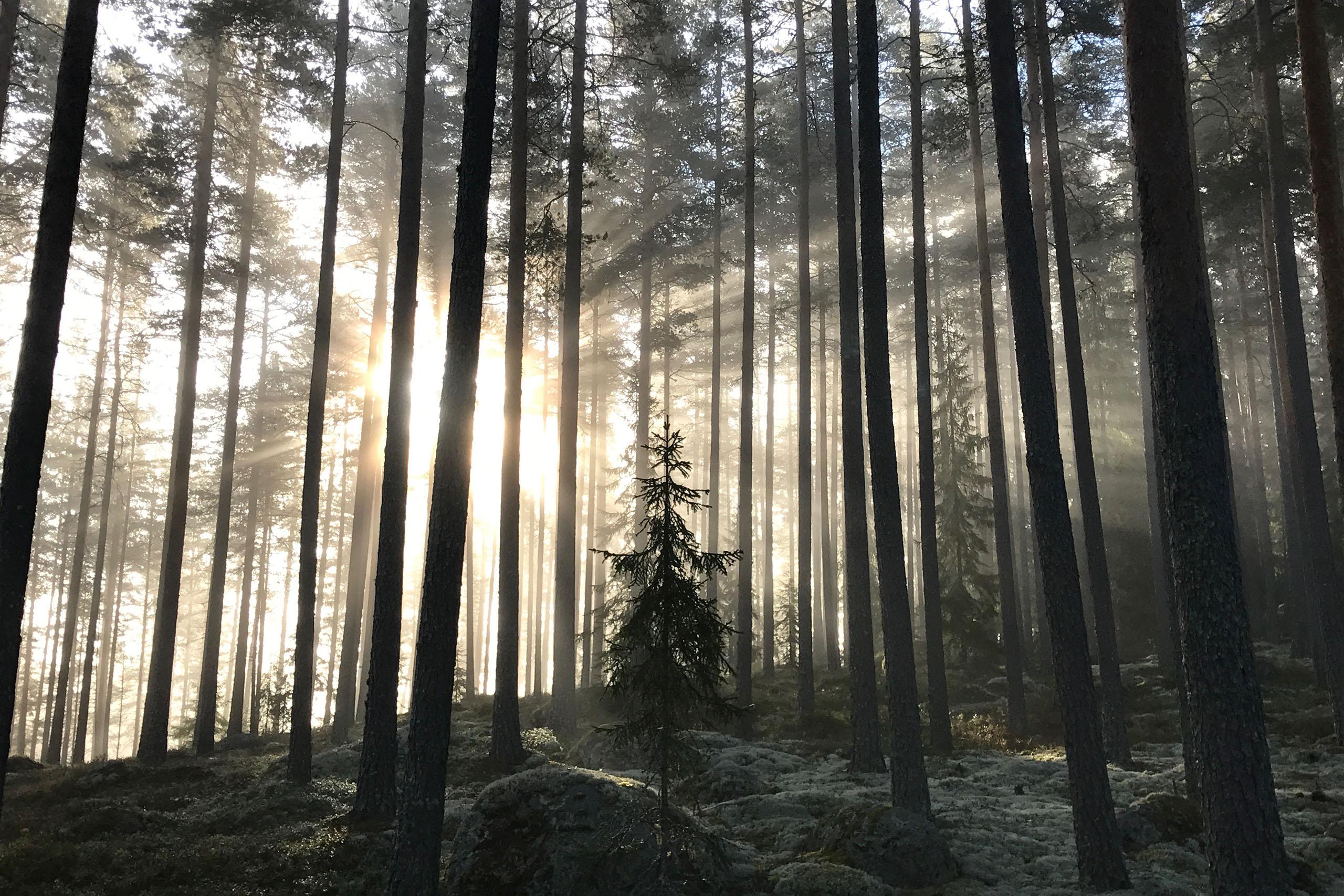 Sol_bland_träd_2560